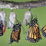 Transform Lifelong Story