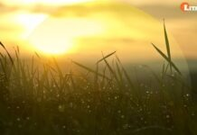 GOLDEN SUNRISE SWITCHWORD MANTRA CHANTING MEDITATION BY SHARAT SIR & DJ KIMOZAVE